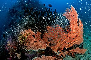 Indonesia Raja Ampat soft corals lots of fish shutterstock 1232650813 opt