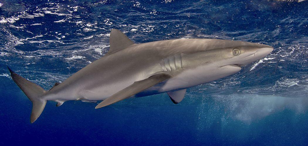 MASQUERADE AQUATIC FISH SEA CREATURES CHOICE OF DOLPHIN SHARK TURTLE WALRUS NEW