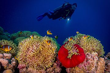 Remarkable Red Sea