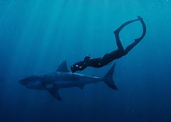 So Africa Great White Free Diver Sunrays