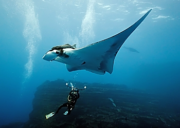 Socorro Manta Photographer Bubble Light wow 2 opt