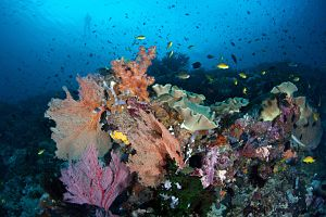 Solomon Islands lush corals lots of fish shutterstock 149235503b opt
