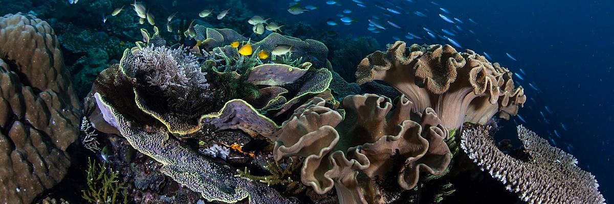 Solomons corals small fish shutterstock 163996334 opt
