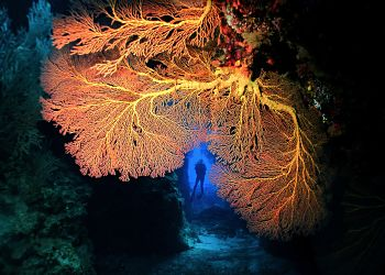 Solomons  Sea Fan Passage Diver