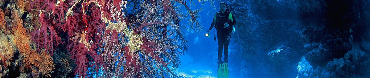 diver sunrays corals 1200x400