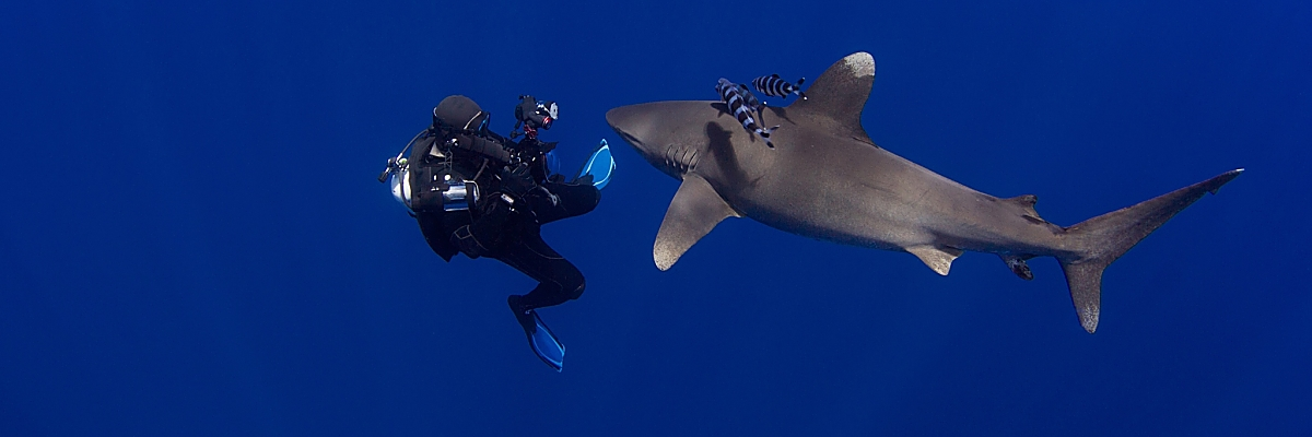 Bahamas Oceanic Whitetip Photographer