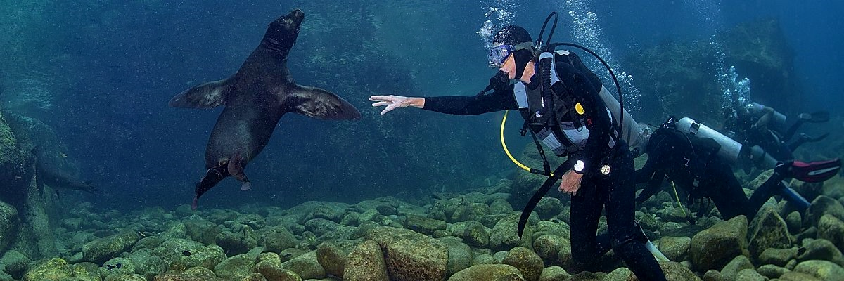 Galapagos diver sea lion shutterstock 239948599 opt