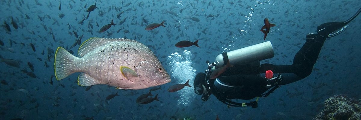 Galapagos divers tons of fish Humboldt opt