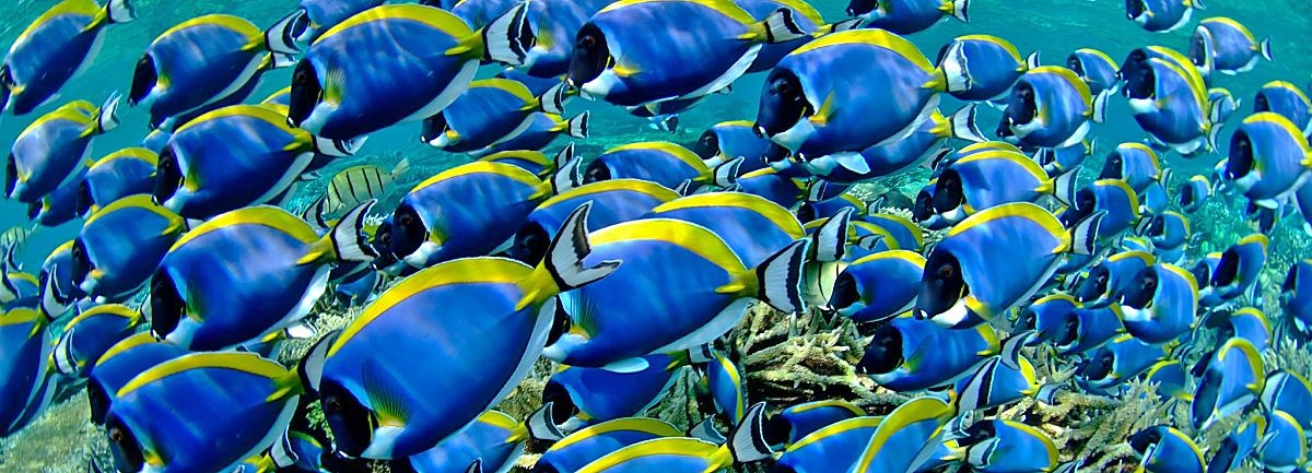 Maldives School on Reef Fotolia 58430028 opt