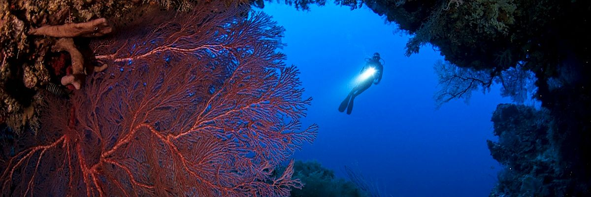 PNG diver cave corals shutterstock 313770698b opt
