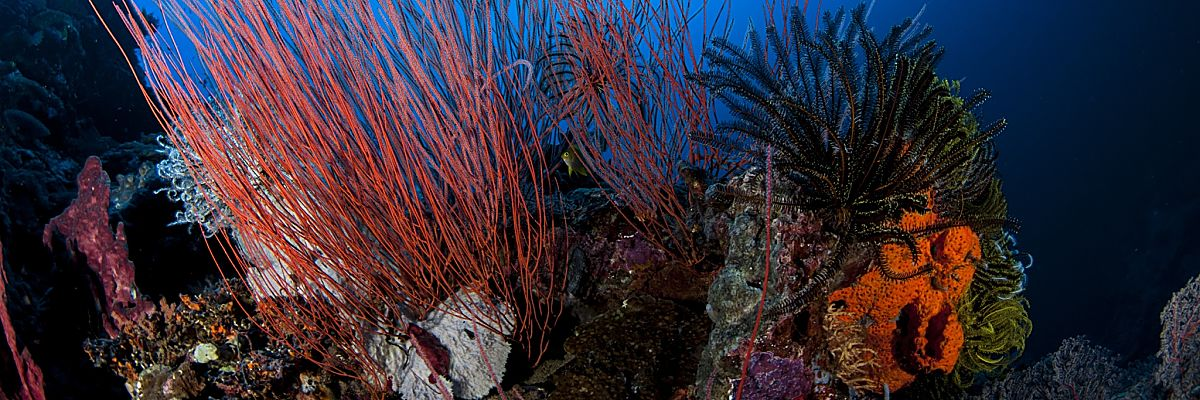 PNG Corals Diver Above shutterstock 313770716 Copy opt