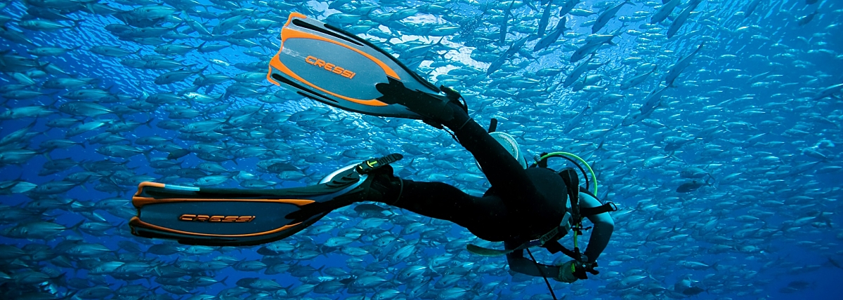 x Diver Amidst Trevally Orange Outline Fins Superb Fotolia 16357493 Subscription XL Copy opt